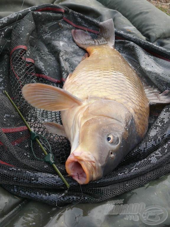 A horog éppen csak a hal szája szélébe akadt, de a finom botnak köszönhetően így is biztonsággal szákba került