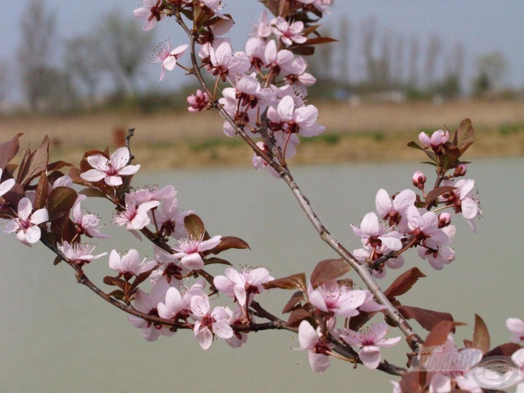 Tavasszal nemcsak a növények többsége, de a horgász szíve is virágba borul!