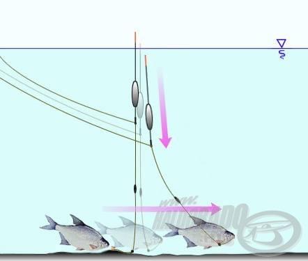 A csalival gyorsan megiramodó karikakeszegek gyakran merítik a feltolós úszót