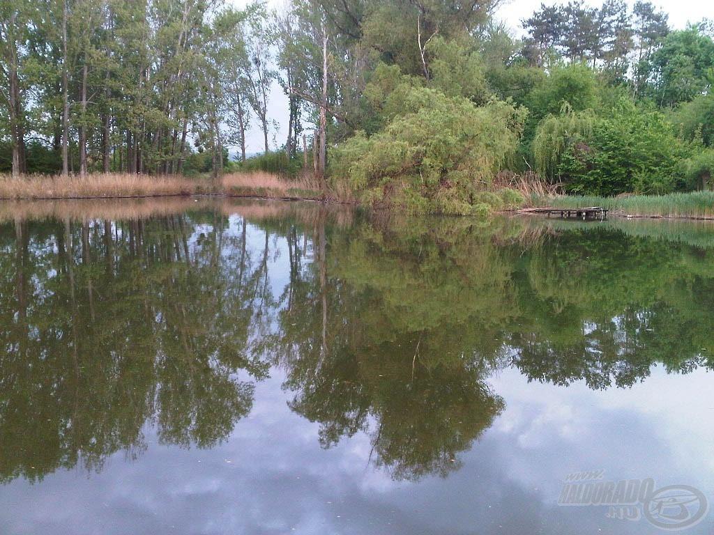 Van, hogy az amurok a tó fölé nyúló fák alatt várják a lepotyogó rovarokat - ilyenkor akár szabad szemmel is felfedezhetjük őket a felszín közelében