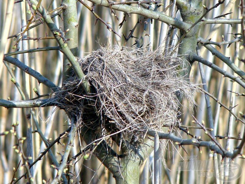 Ritka madarak is költenek itt, helyi szakértőnk szerint poszátaféle elhagyott fészke lehet