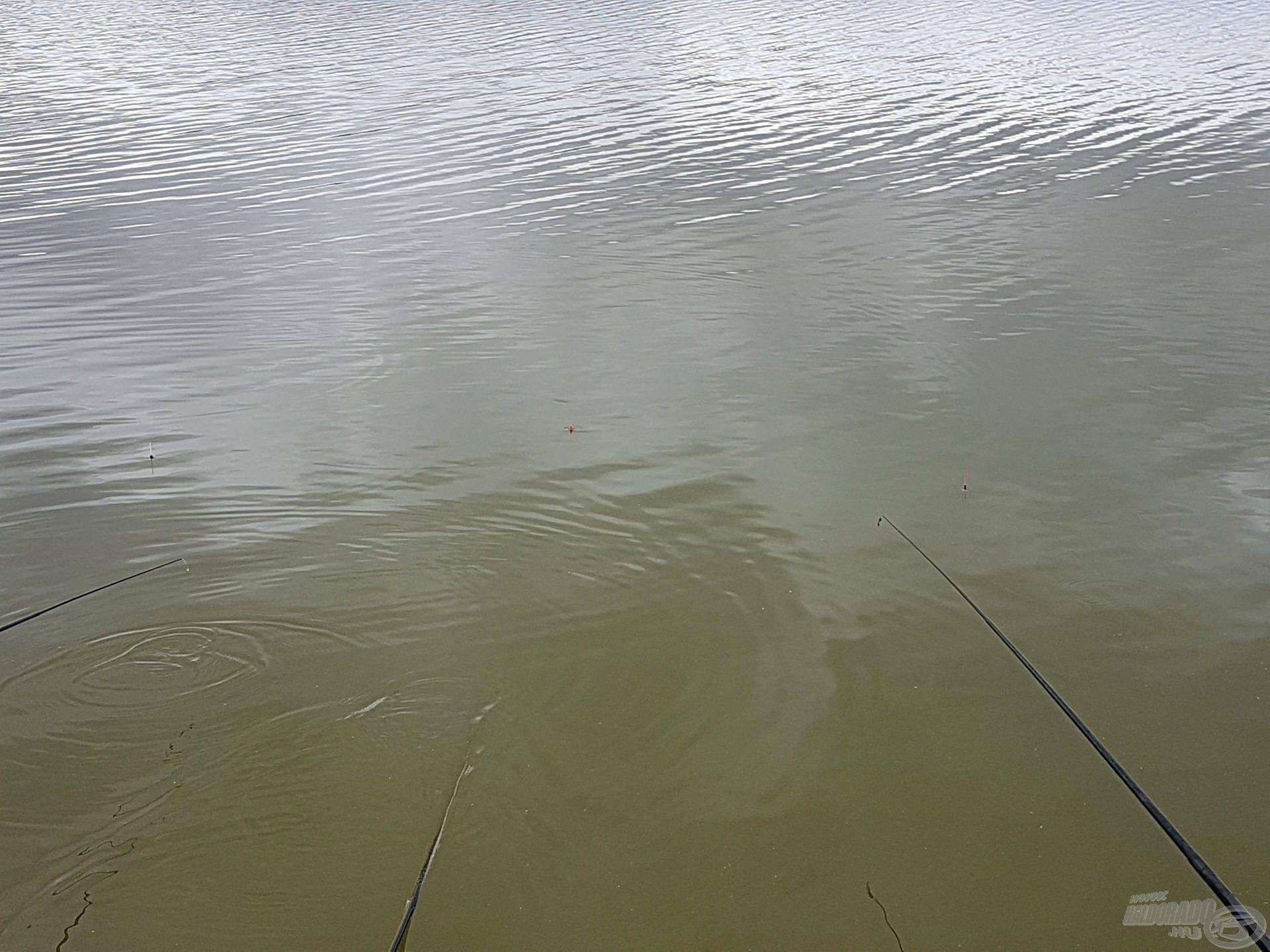 Úszó – verseny
