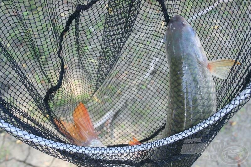 … és a lényeg: a szép folyami halak - ezekért is jövünk ide