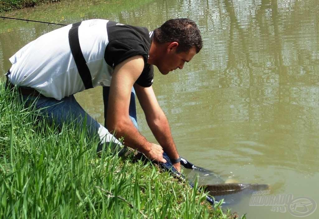 A nagyméretű és bevonatos merítőből sérülésmentesen engedhető vissza még ez a szép hal is