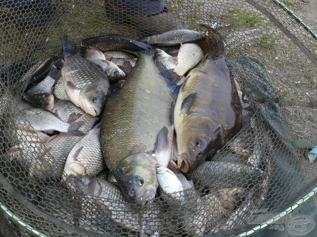 A sok kárász között a két bónusz hal: egy nagy dévér és egy ponty