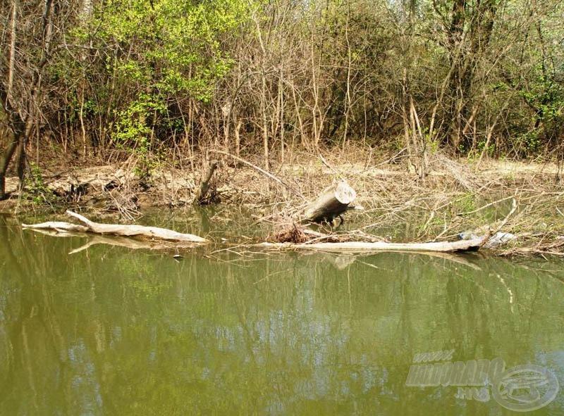 A vízbe dőlt fák, akadók környéke is jó lehet