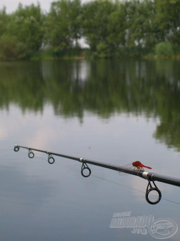 Nem horgásztunk, de legalább ilyen szép piros szitakötőket…
