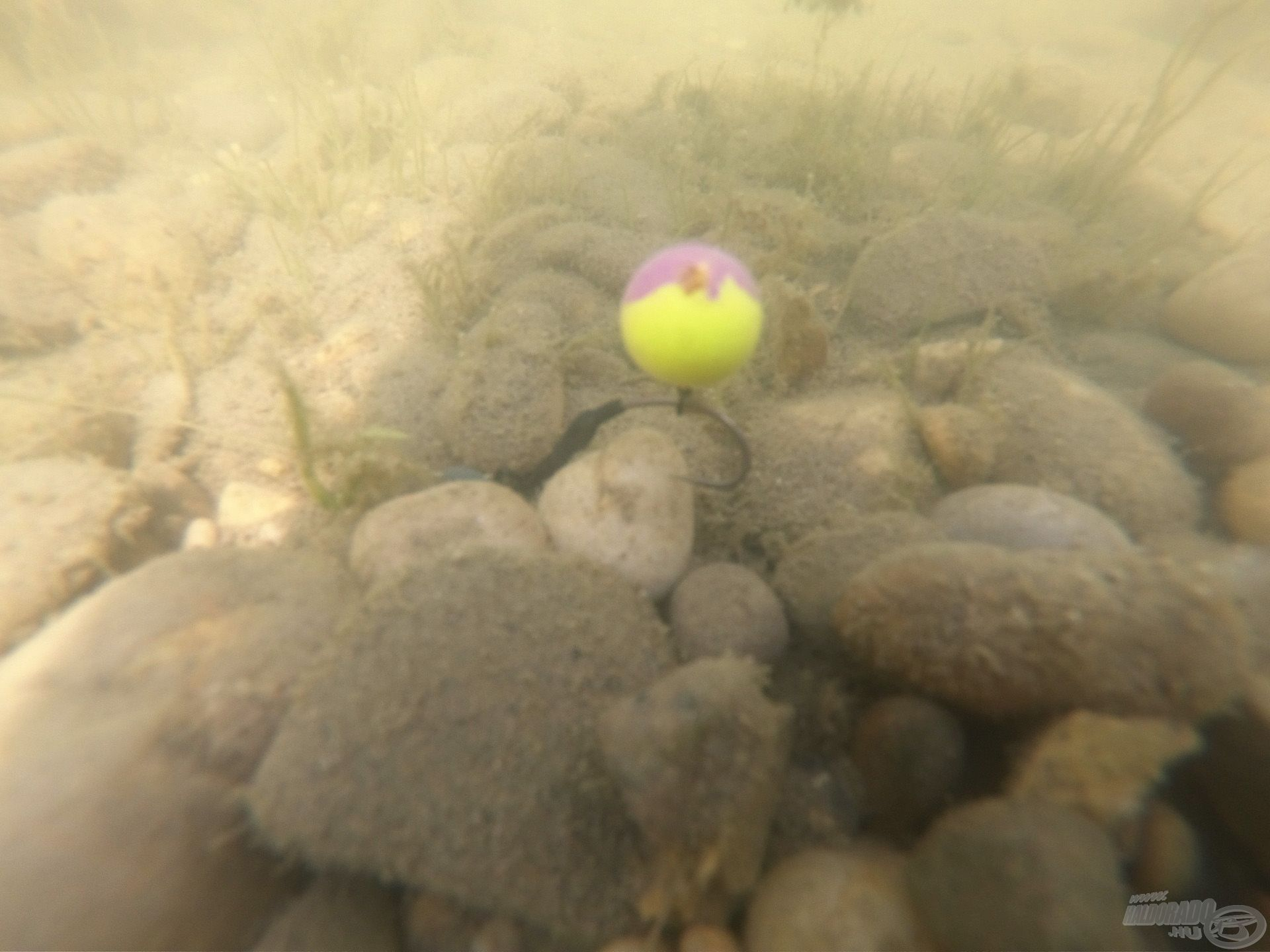 A vízben ilyen a pozícióban várta a pontyokat