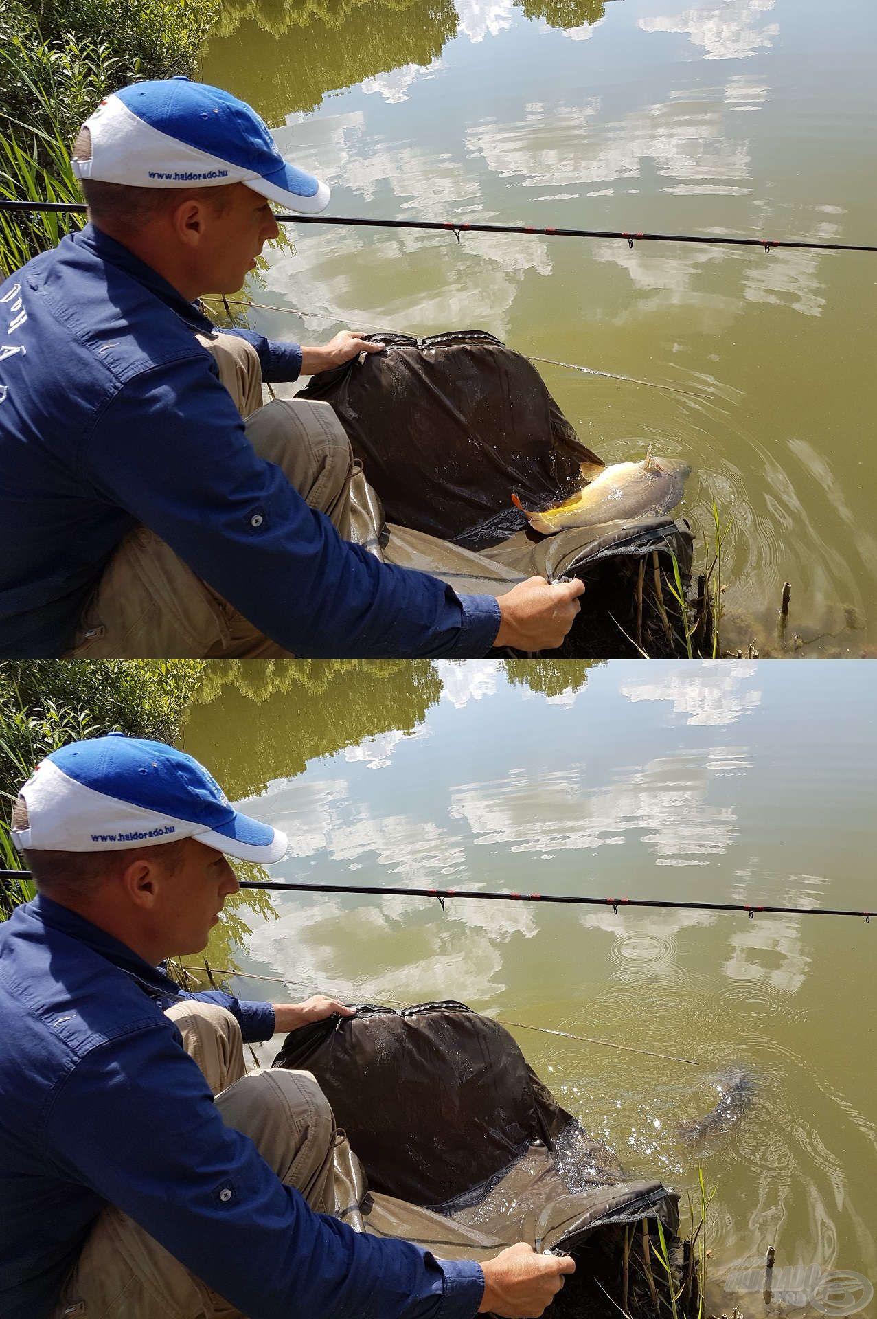 A halakkal való kíméletes bánásmód minden horgászatom egyik alappillére, mely a kisebb…