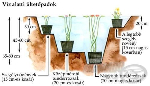 Párkány-kialakítás a növényeknek