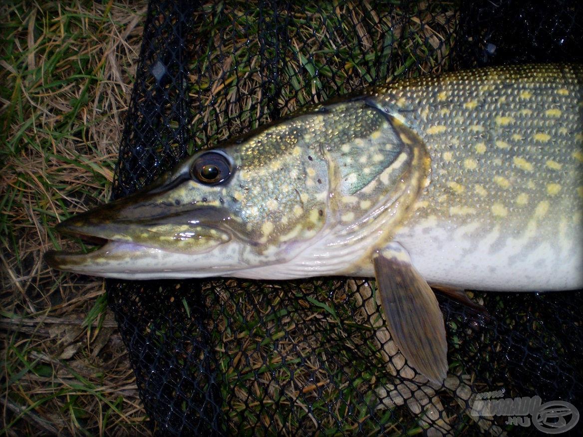 Egy tartalmas nap első hala…