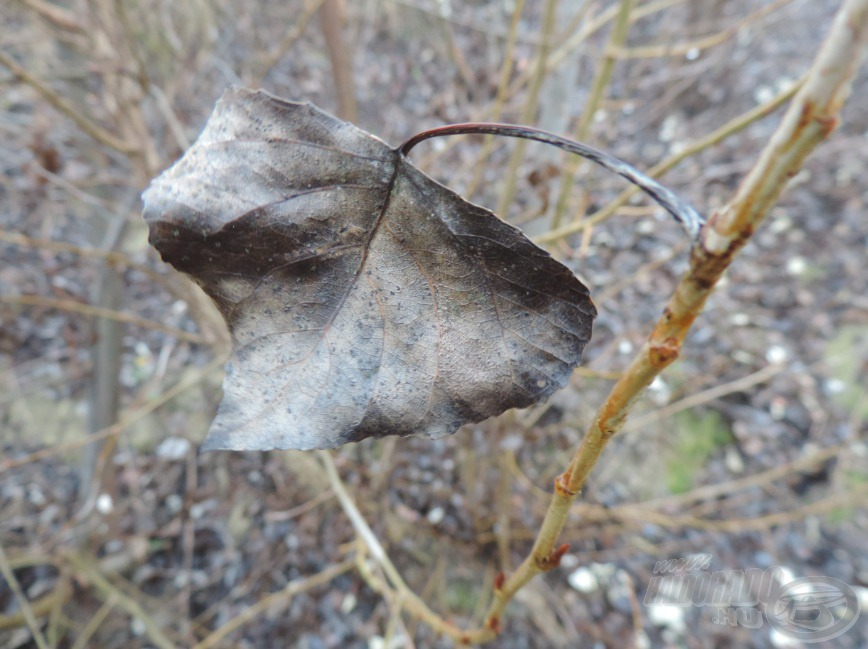 Elhalt levelek…