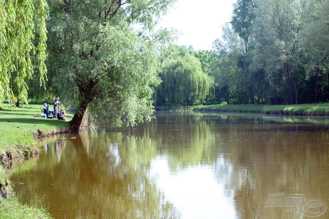 Öreg fűzek árnyéka alatt sétálni és horgászni is kellemes