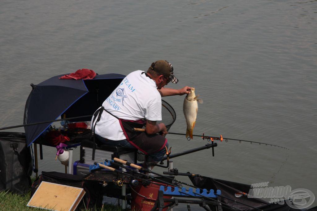 Pikkelyes ponty a fogott halak nagy része