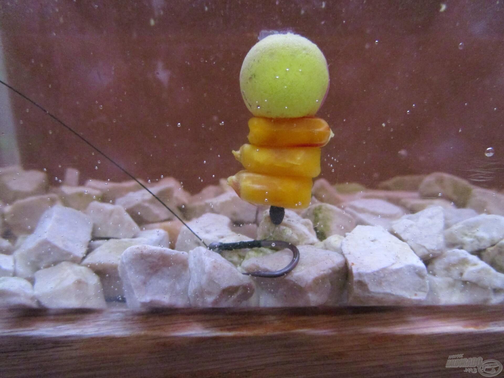 A 6-os méretű Korum Specimen horgot ilyen és ehhez hasonló kombinációkhoz szoktam használni, kifejezetten nagy halakra. A 14 mm-es pop-up szépen megemeli a kukoricafüzért