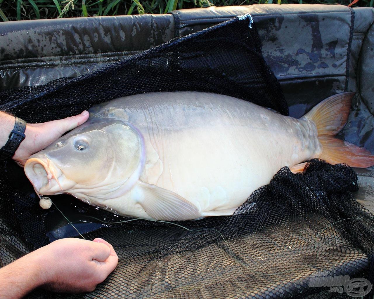 Nagyon fontos halakkal való kíméletes bánásmód, ami tükröződjön a képeken is!