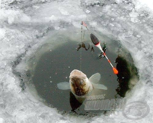 Ha egy tavon tisztában vagyunk a süllők téli kedvelt tartózkodási helyeivel, akkor nyert ügyünk lehet