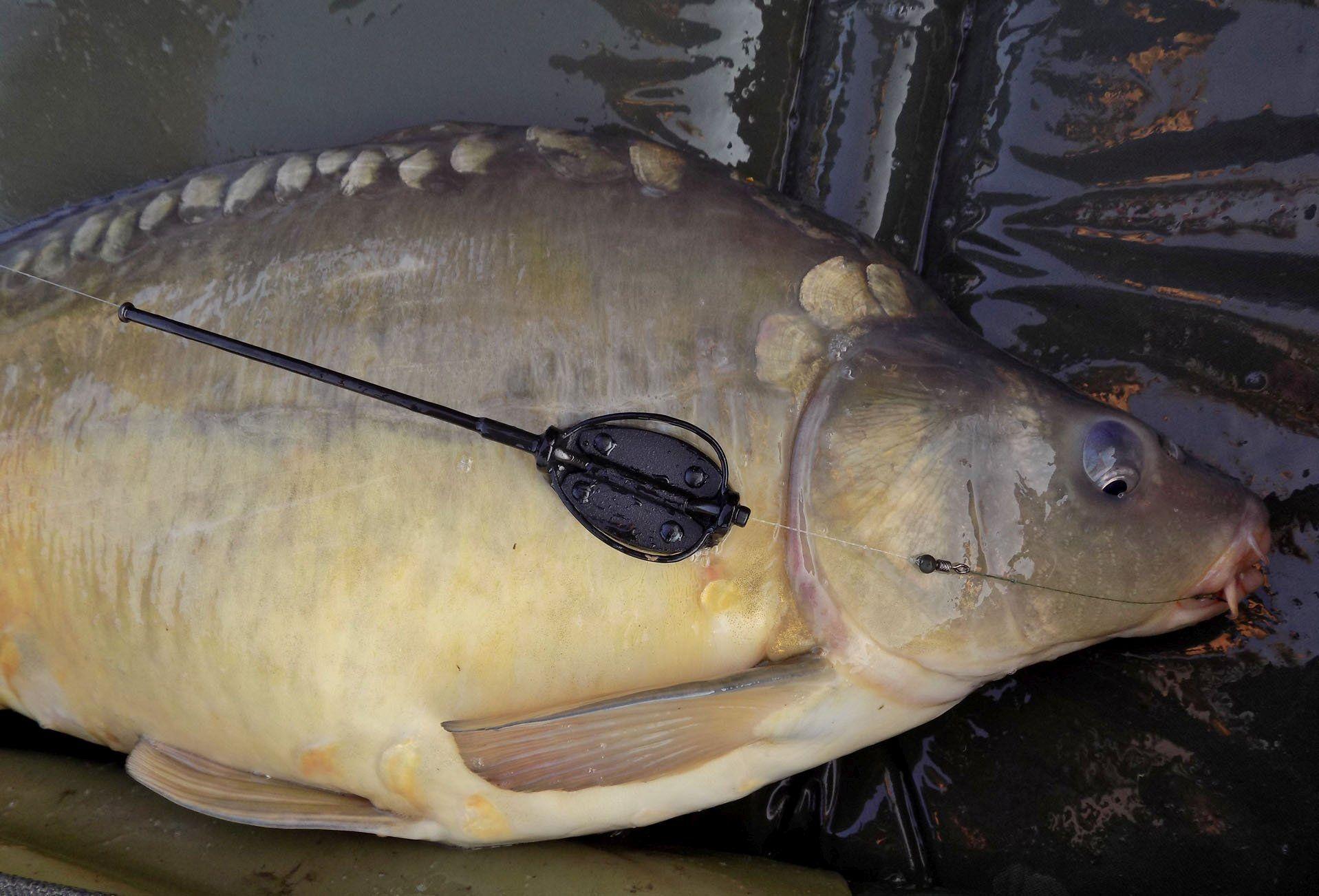 Olykor elég egy csöppnyi kosár is a sikerhez! Nyugodt szívvel ajánlom minden feederhorgásznak a light technikát, ahol valóban minden hal megfogása egy élménnyel ér fel…
