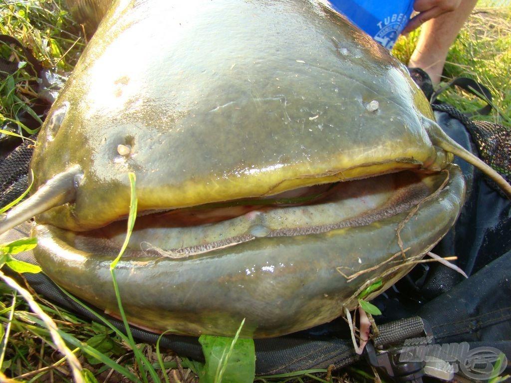 Ilyen halakhoz már tényleg speciális eszközök szükségesek...