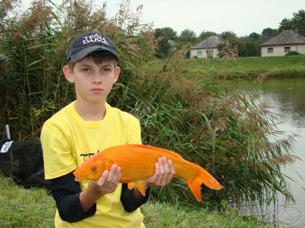 Narancs …