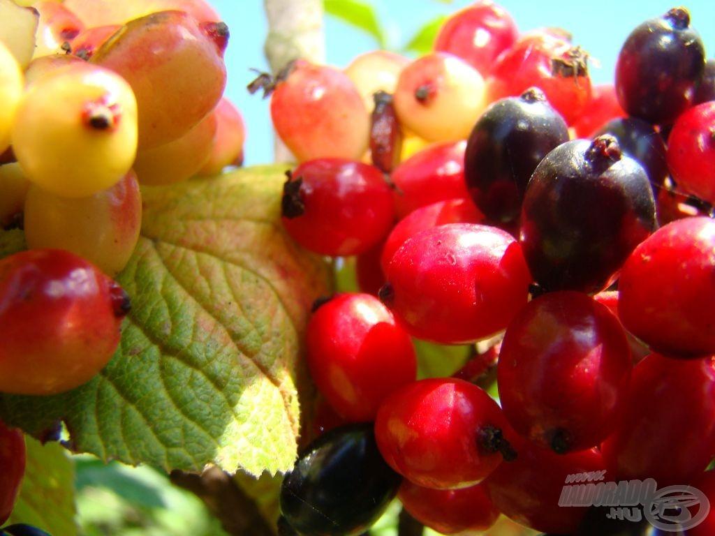 Örök körforgás: lassan újra előjönnek az ősz színei…