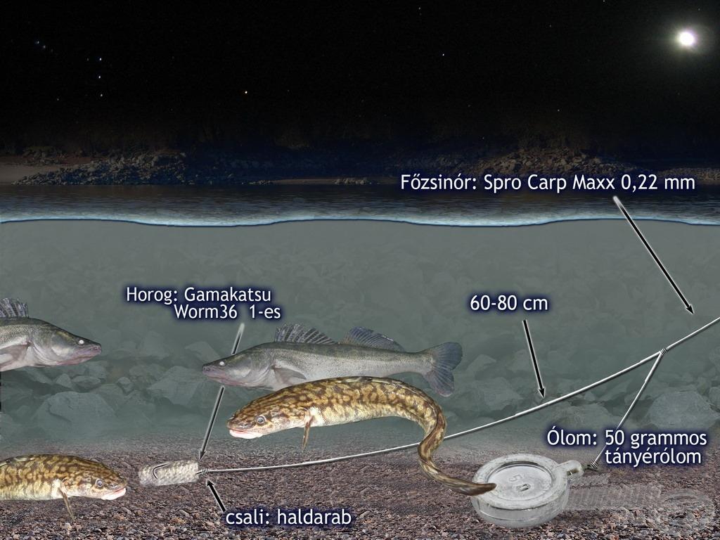 """A jól bevált, rendkívül egyszerű """"nagy hurkos"""" végszerelék a menyhalak és a süllők fogása során is bizonyította fogósságát"""