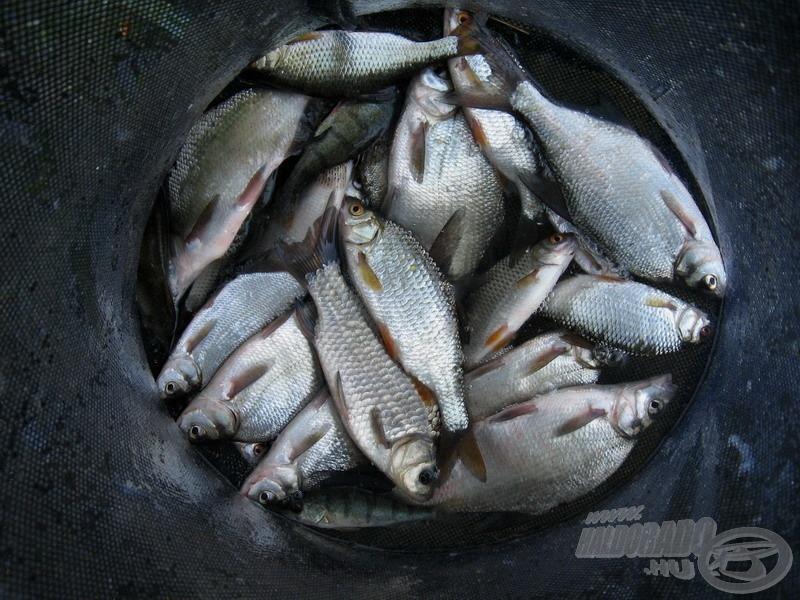 Az öbölben élő halak választhatnak. Alkalmazkodva (életben) maradnak, vagy elköltöznek (elpusztulnak?)