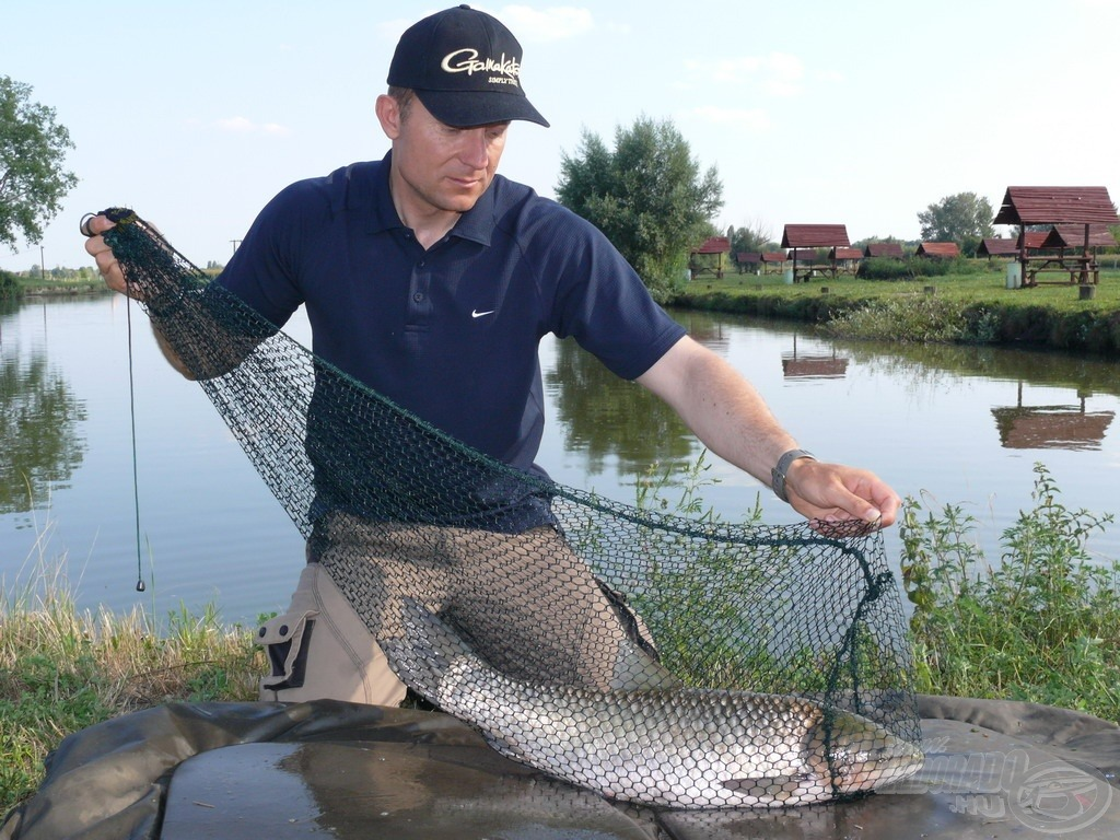 A hagyományos zsákos haltartókban könnyedén elfér 1-2 db átlagos méretű ponty vagy amur, de a kicsi mozgástér és nagy lyukbőség károsítja a halakat