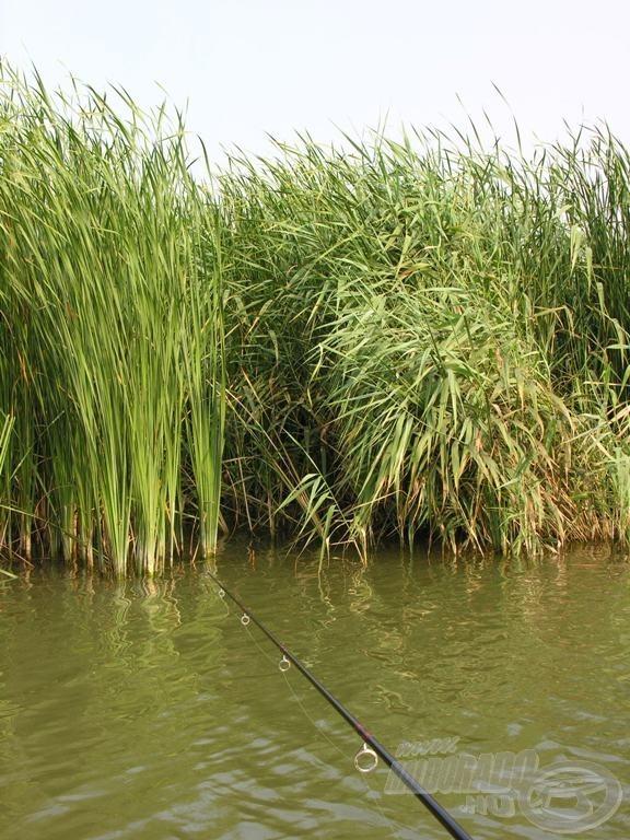 Itt is lehet horgászni. Sőt, még hal is akad
