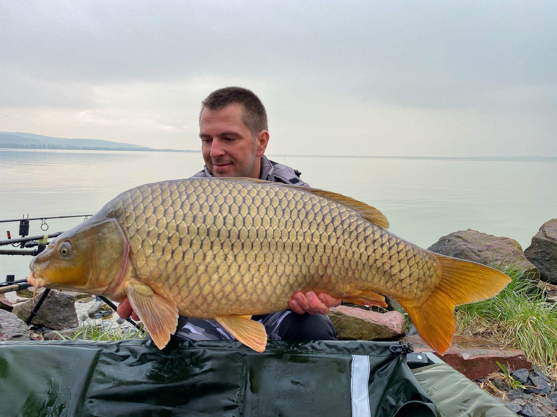 Az utolsó fogásaim egyike, amely egyben a túrám legnagyobb hala is lett