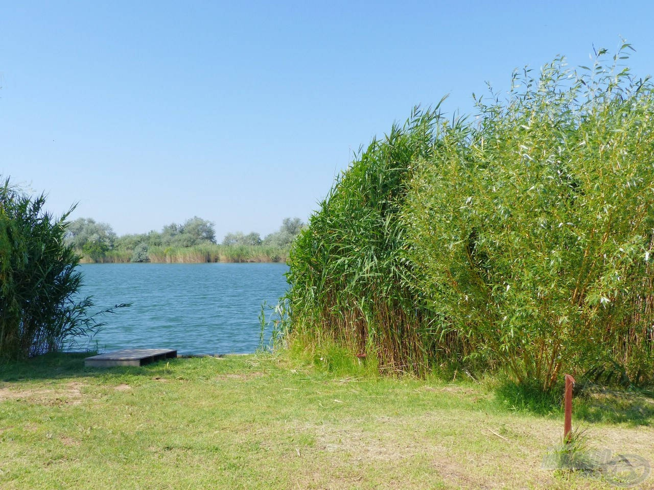 Gyönyörű nádas veszi körül a tavat, ahol diszkréten kialakított horgászhelyek várják a horgászokat