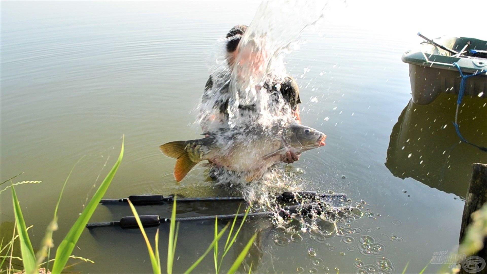 A hal (és a horgász) nedvesen tartása nagyon fontos!