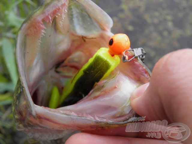 … az élénk színű gumihal