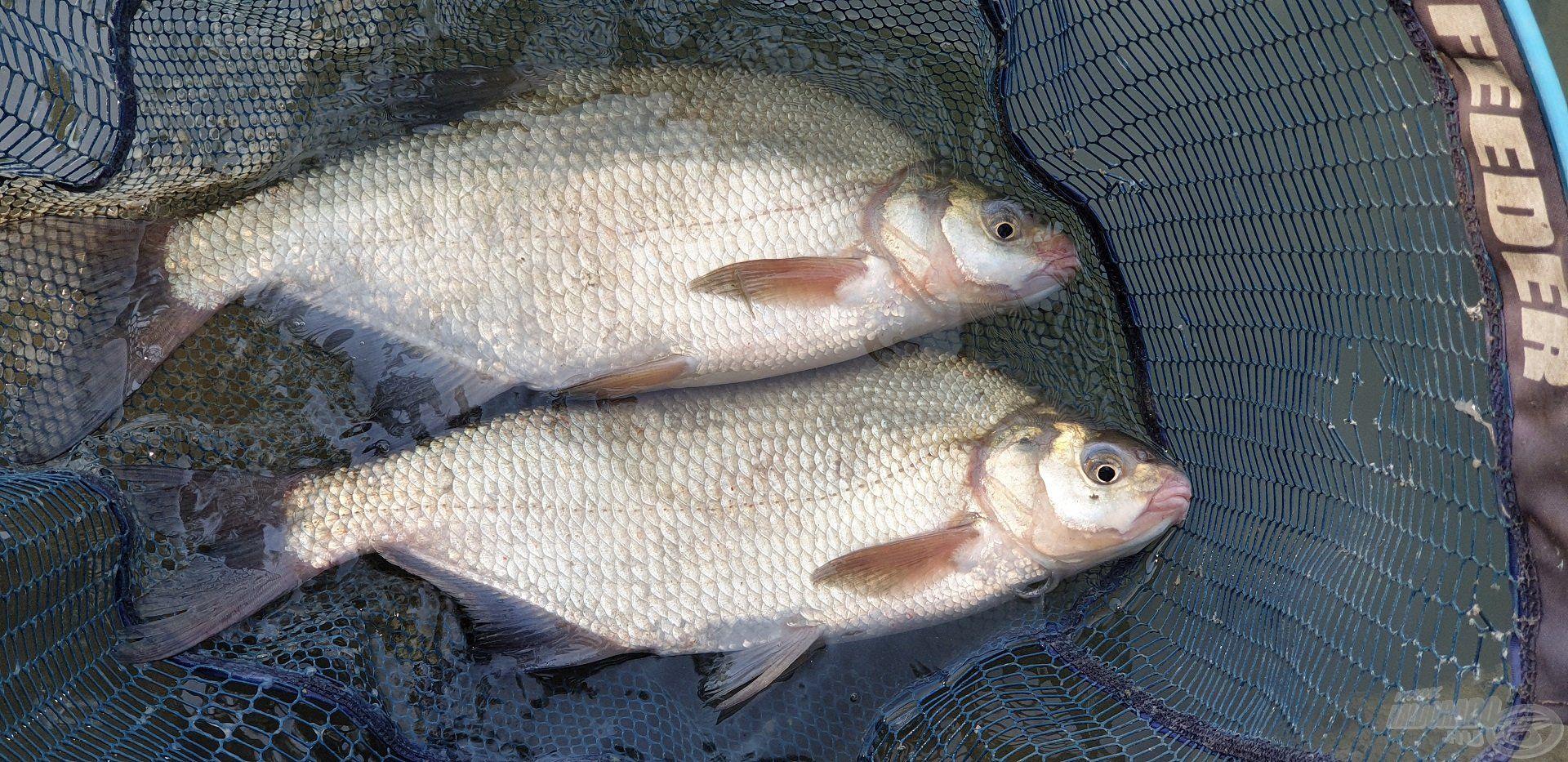 Két bottal horgászva nem volt ritka, hogy dupla kapásnak örülhettem