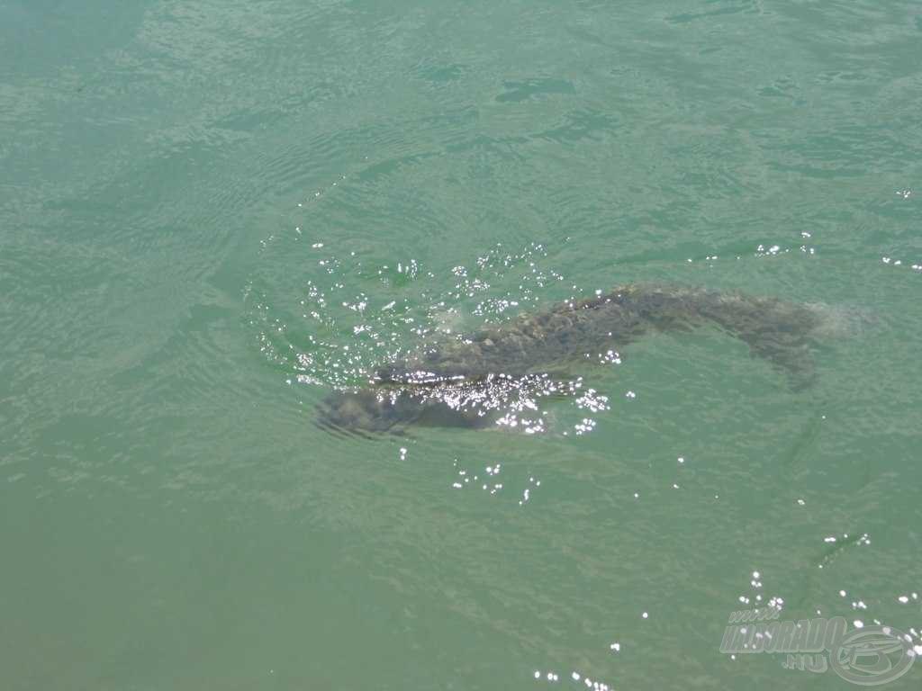 Ha ilyet látunk partközelben, akkor a vízközti horgászaté a terep!