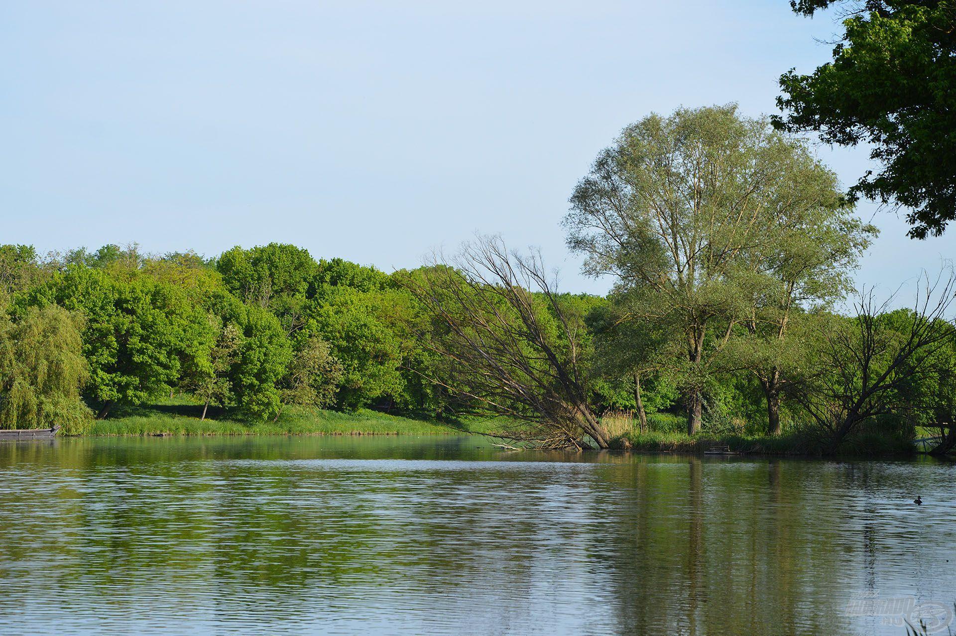 Gyönyörű, természetközeli, vadregényes környezet jellemzi a tavat…