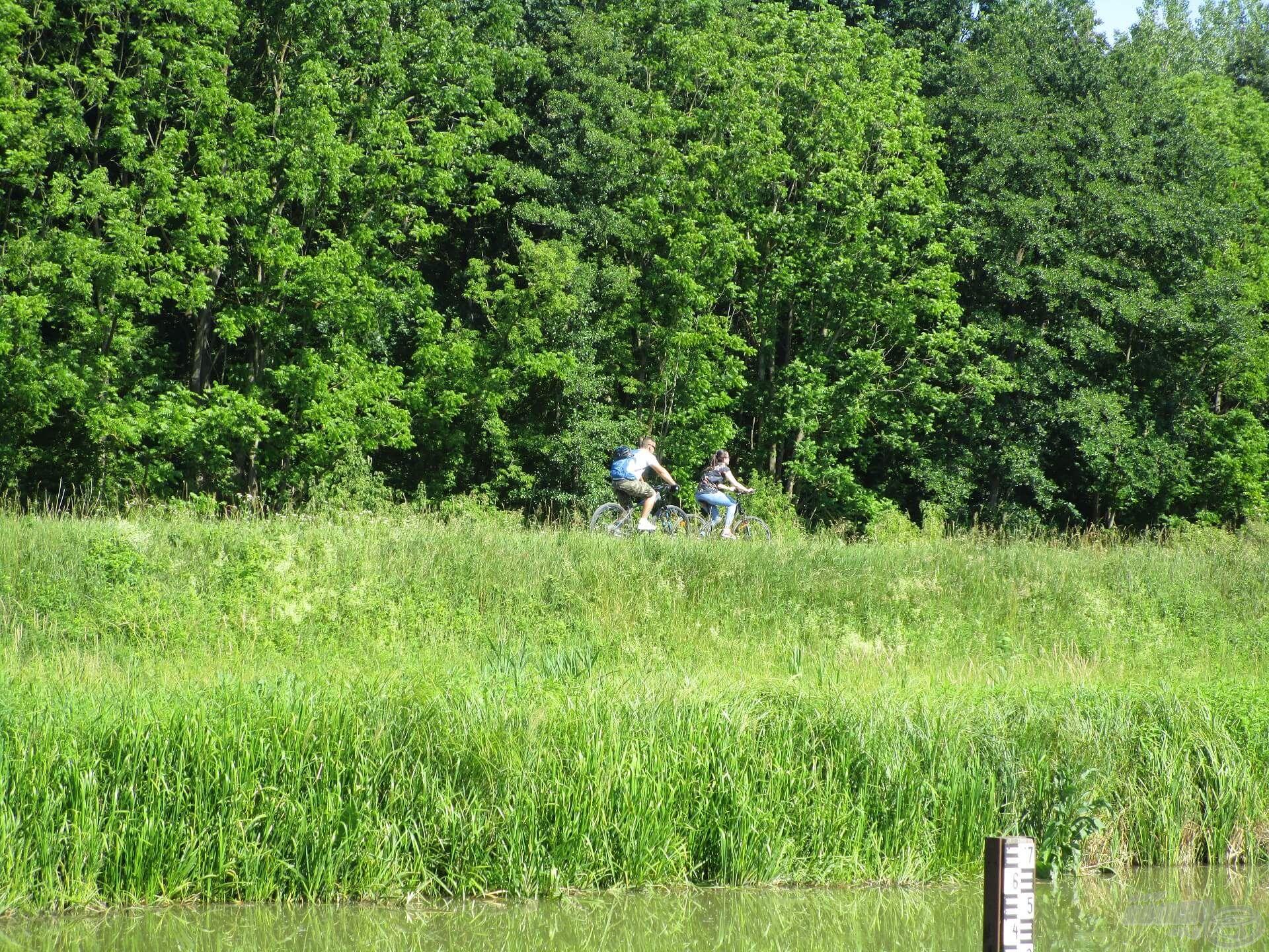 A Zala töltésén kialakított út ideális kerékpározáshoz. Jómagam is szívesen tekerek errefelé, és ha kevés a cuccom, mindig biciklivel jövök horgászni