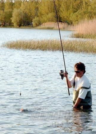 A nádfalak előtti nyílt területeken biztonságosan megszákolhatjuk a már kifárasztott halakat