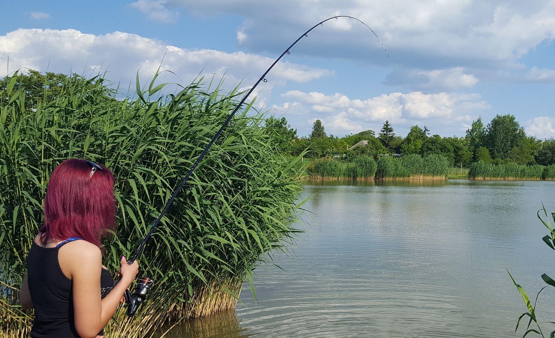 Evelin halat fáraszt…