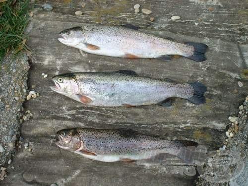Gyönyörű halakat sikerült fogni