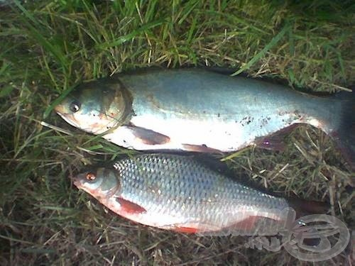 Persze ilyenkor is becsúszhat egy-két szebb hal