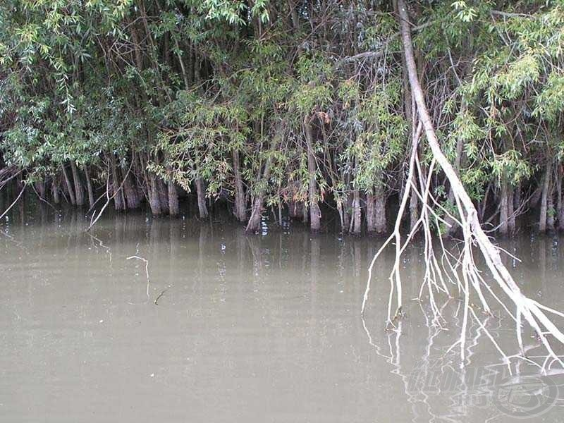 The Hungarian Mangrove Forest