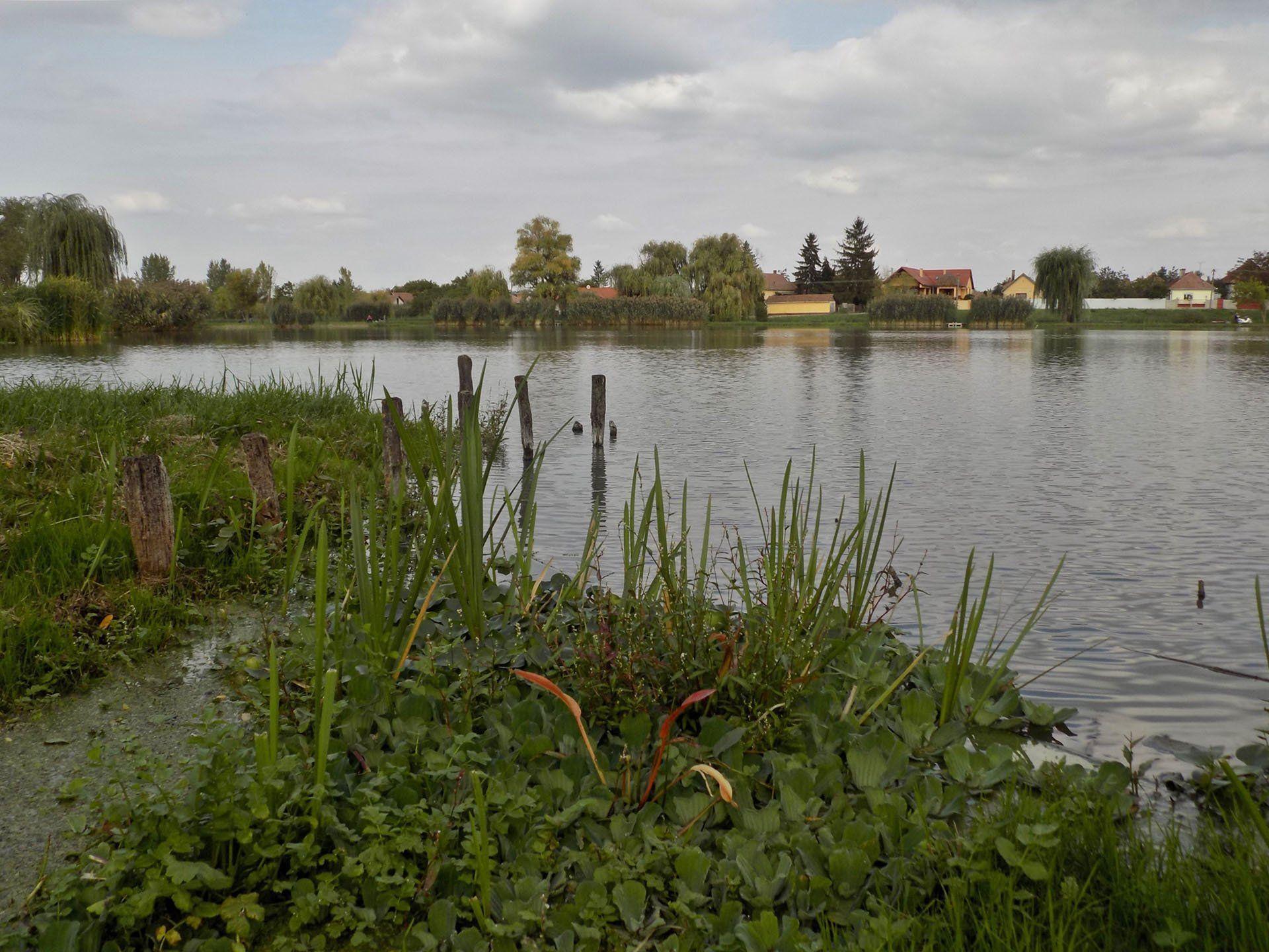 Egy remek horgászvíz a város kellős közepén! A part mentén rengeteg vízisaláta és vízijácint található, ami különös hangulatot kölcsönöz egy-egy merítés folyamán
