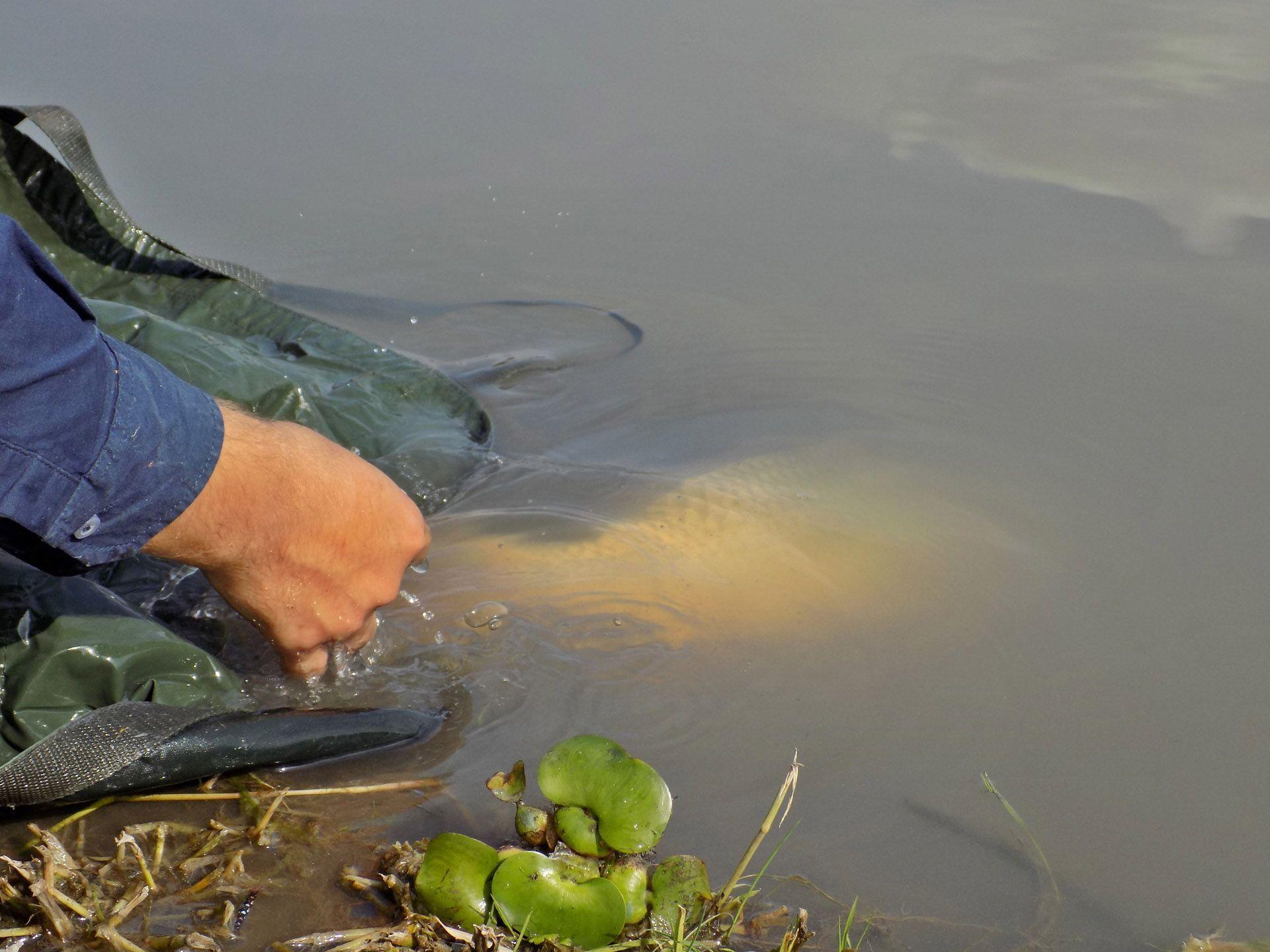 Szép élményekkel gazdagodtam ezen a horgászaton. Mindenkit csak buzdítani tudok arra, ha akad pár szabad óra, azt érdemes a vízparton eltölteni. Sikeresen!