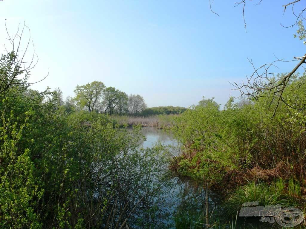 A horgászhely mögött nagy kiterjedésű mocsaras rész található, gazdag élővilággal