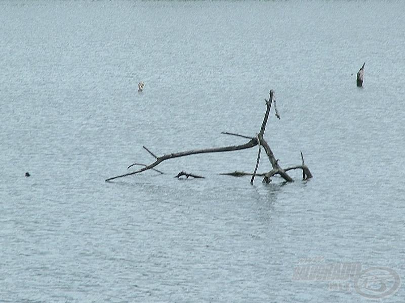 Akadóban, fás terepen történő horgászathoz is kiválóan alkalmasak a SHIMANO e termékei