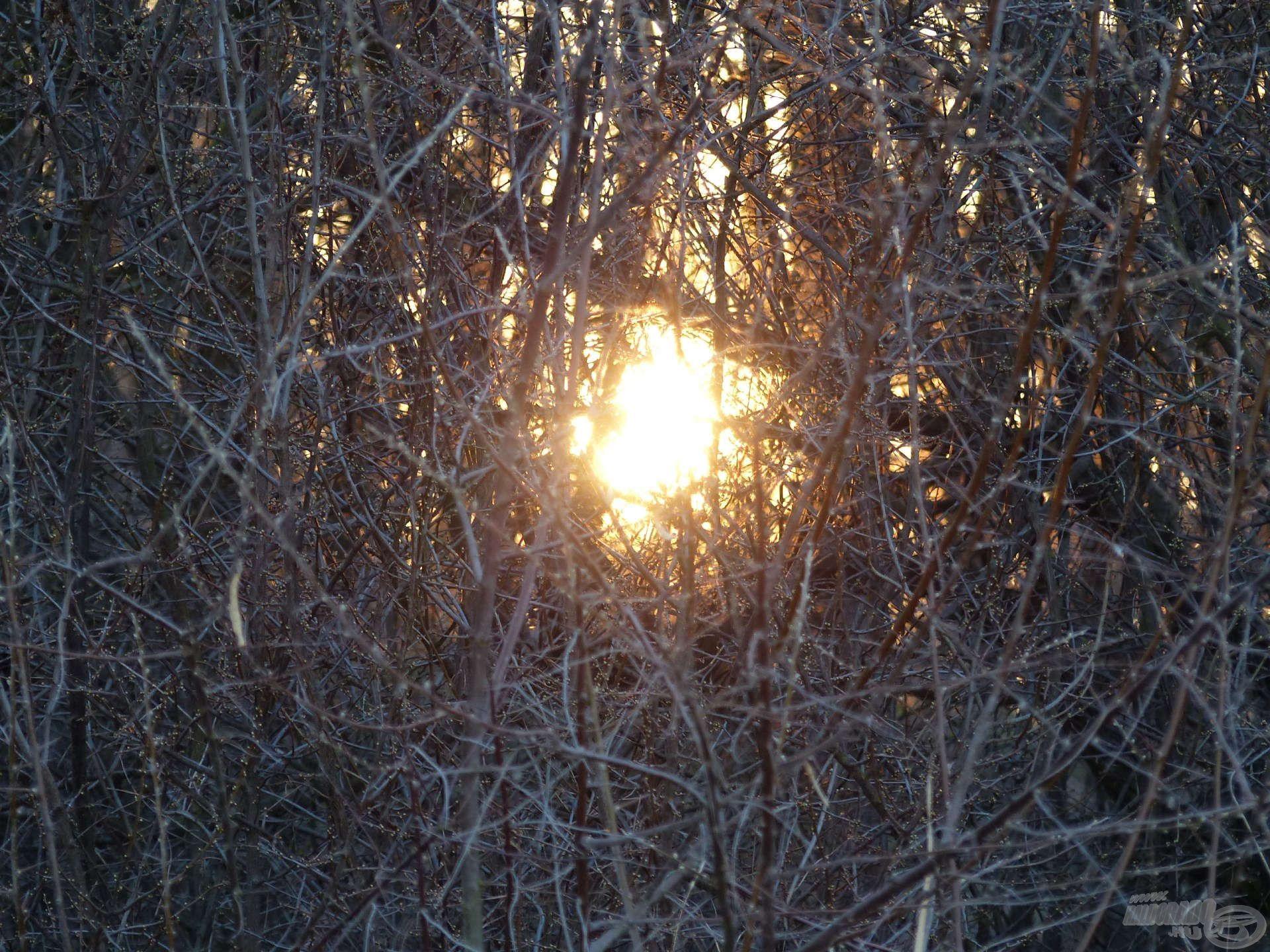 Már kora reggel a vízparton voltam, az első napsugarak beélesített feederbotjaimon csillantak meg