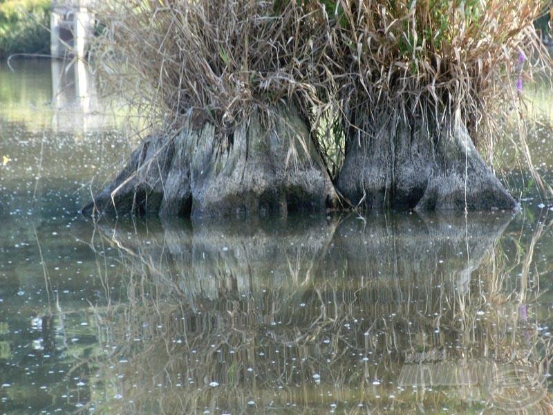 A tuskó teteje vízben szokott lenni, nagyon jó haltartó hely volt