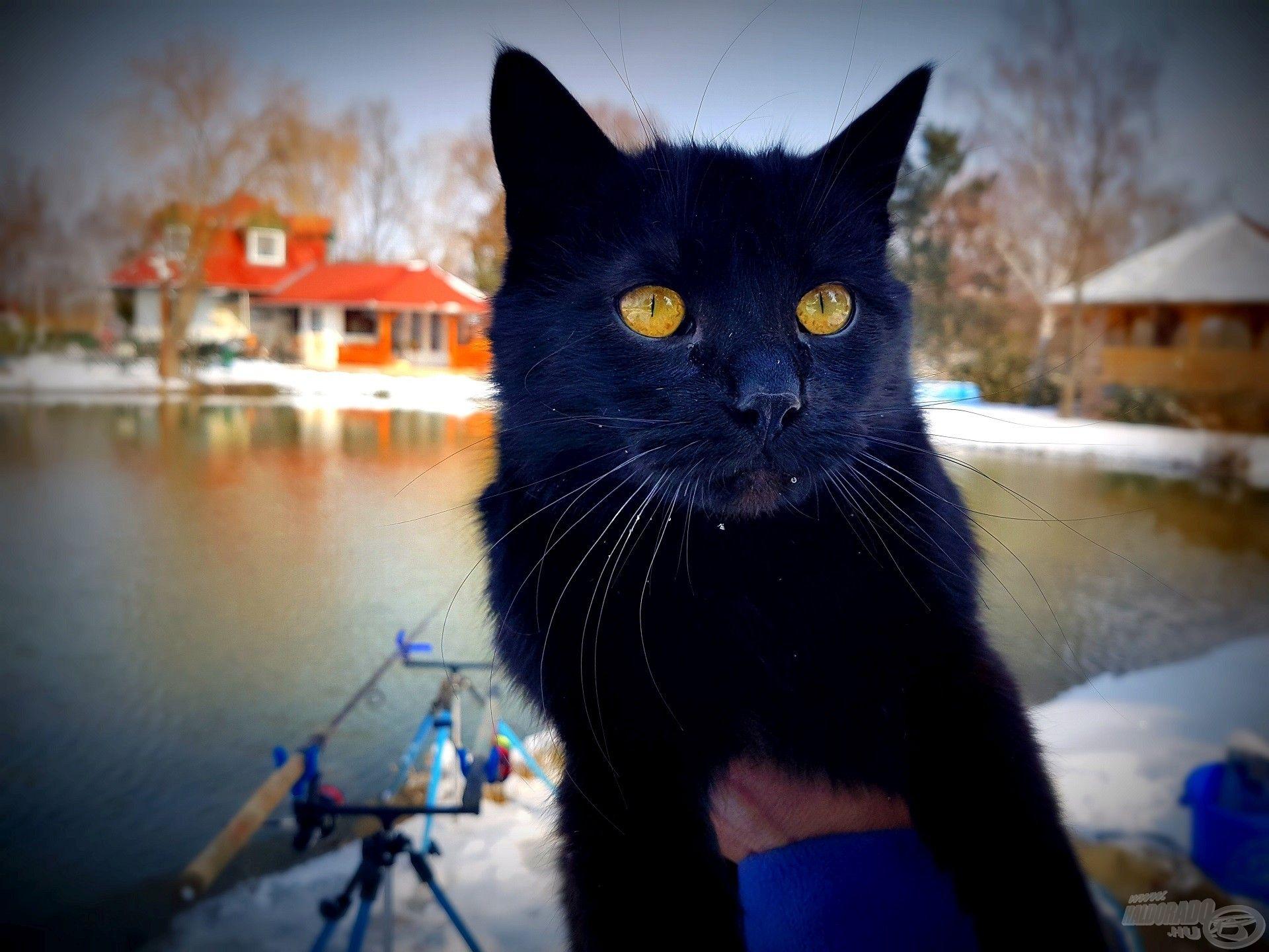 """Nem hozott balszerencsét a """"préri fekete macskája"""", s bár bundája kellemesen meleg volt, hamarosan útjára engedtem"""