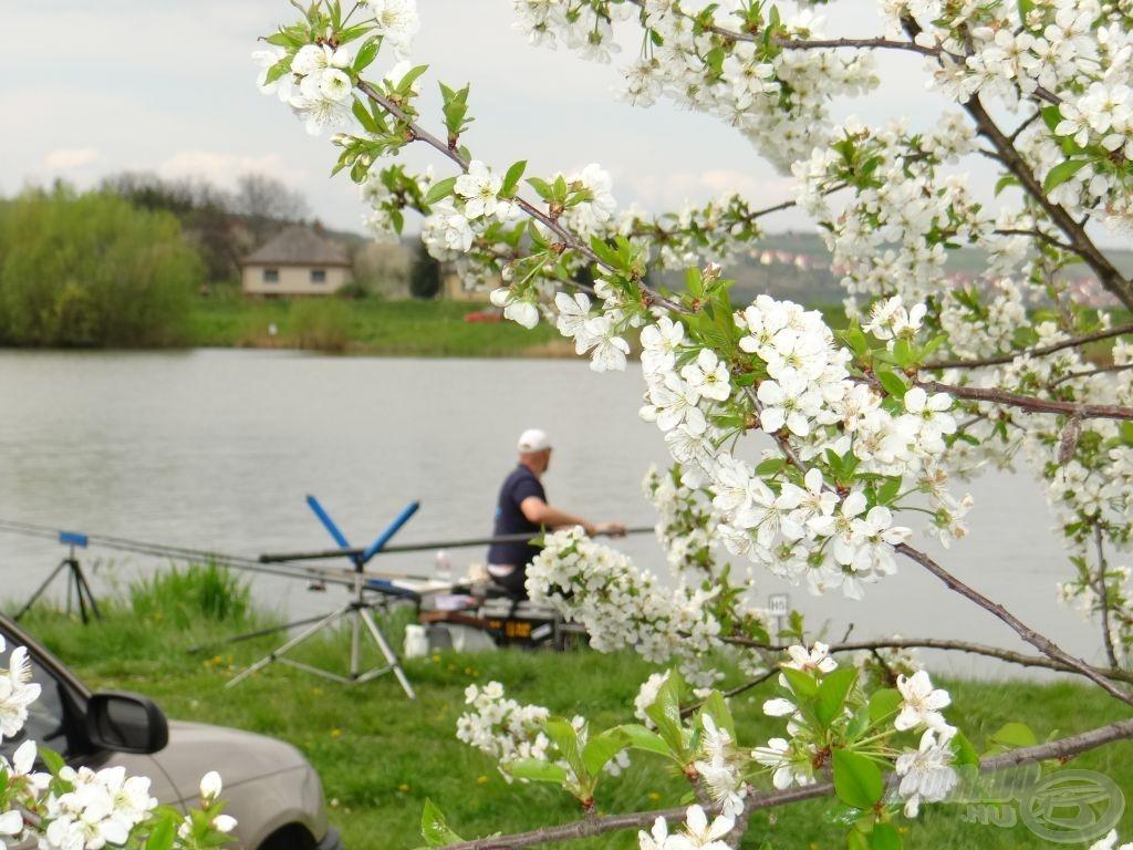 Egy szép tavaszi pillanat